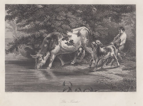 Mucca e Vitello, W.French, 1840-50
