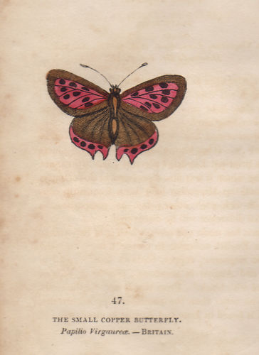 Small Copper, 1832
